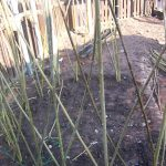 Willow Dome Beginning